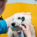 Ветеринарные услуги. Офтальмология.