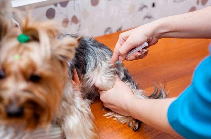 Прививки и дегельминтизация животных