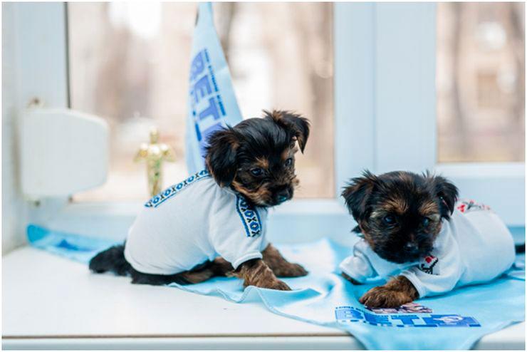 маленькие собаки уход