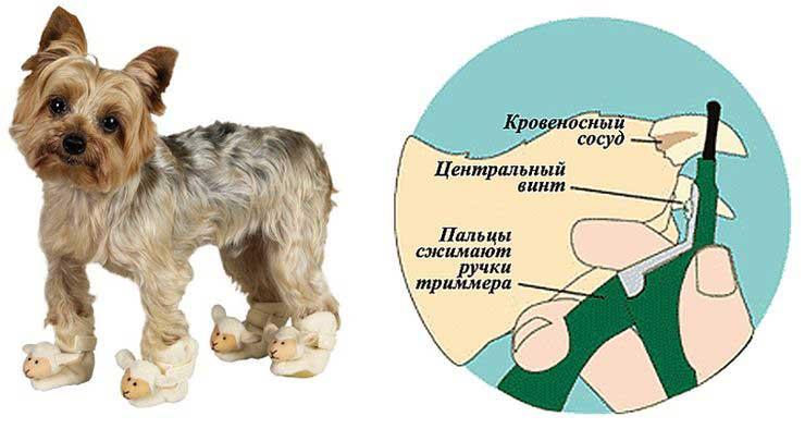 Рекомендации по зимнему уходу за лапами собак