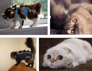 Травмы у кошек