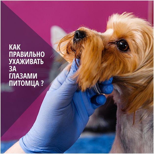 Как правильно чистить глаза собачке